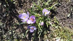 Blogi  OMAISAPU.fi      : Äideille kukkia kuvina kiitokseksi
