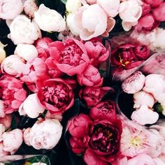 peonies and tulips Flower Power, My Flower, Fresh Flowers, Beautiful Flowers, Pink Flowers, Pink Peonies, Cut Flowers, Dried Flowers, Pink Roses