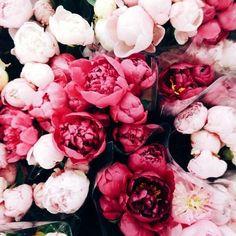 peonies and tulips Flower Power, My Flower, Fresh Flowers, Beautiful Flowers, Pink Flowers, Cut Flowers, Dried Flowers, Pink Roses, No Rain