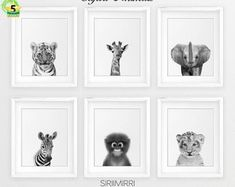 Safari Nursery Decor, Black White Baby Animals Set 6, Zebra Giraffe Lion Print, Modern Nursery Wall Art, Safari Animal Prints, Printable Art