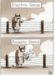 Cow electric/acoustic fence cartoon Music Jokes, Music Humor, Funny Music, Guitar Quotes, Mozart, Cigar Box Guitar, Partition, Seriously Funny, Eye Roll
