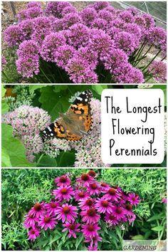 Shade Flowers Perennial, Part Shade Perennials, Hardy Perennials, Flowers Perennials, Partial Sun Perennials, Purple Perennials, Purple Perrenial Flowers, Flowers For Full Sun, Shrubs For Full Sun