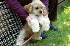CUTEST dog breed EVER!!!!