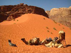 Recorrido en camello por el Wadi Rum, lo encontrarás en neustro programa Jordania ACtiva | Insolit viajes