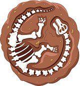 Fósseis de dinossauro dos desenhos