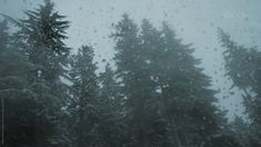 Evergreen trees lightly dusted with snow are seen through the wet window of a car as it travels along a road near Mt. Hood, Oregon. #oregon #trees #pnw