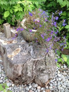 Chunk of wood makes great 'table' for pots of annuals, www.purplepottingshed.com
