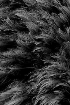 ☾ Midnight Dreams ☽  dreamy & dramatic black and white photography - feathers