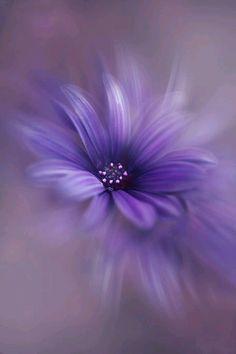 Photo by Allison Purple Love, All Things Purple, Shades Of Purple, Deep Purple, Purple Stuff, Purple Daisy, Purple Wallpaper, Flower Wallpaper, Purple Flowers