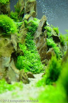 567 best aquascape images fish tanks fish aquariums pisces rh pinterest com