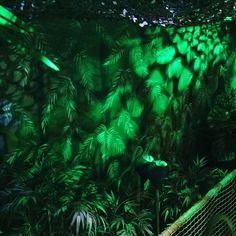 c1b1142202127 Handpainted Jungle Mural Special Effects. Escape Rooms.  www.artifexdesigns.co.uk