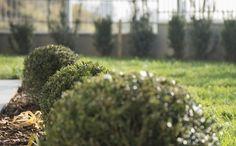 Giardini Castelnuovo Rangone: Progettazione realizzazione giardini, piscine, laghetti,aiuole e costruzione esterne in muratura.Potatura e giardinaggio