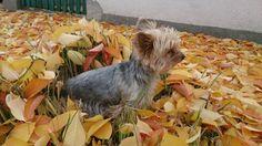 Seryke őszi levelekben