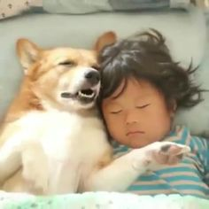 Cute Funny Animals, Cute Baby Animals, Funny Dogs, Animals And Pets, Cute Cats And Dogs, Dogs And Kids, Cute Animal Videos, Funny Animal Pictures, Baby Dogs