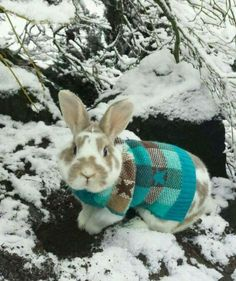 I'm not usually a fan of clothes on animals. Love the bunny wearing the cute sweater Cute Baby Bunnies, Funny Bunnies, Cute Baby Animals, Animals And Pets, Funny Animals, Cute Babies, Lop Bunnies, Bunny Care, Fluffy Bunny