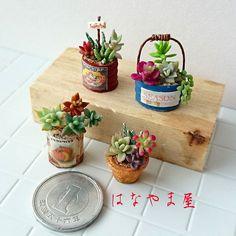 541 отметок «Нравится», 56 комментариев — miniature*はなやま屋 (@hanayama05) в Instagram: «☁  木工に飽きたので #粘土多肉植物 を寄せ植えしました。  安定したら色足しとラベル汚したりします。  寒いです。  寒いです。  寒いです……。 #ミニチュア#樹脂粘土…»