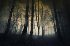 Bosque oscuro con lluvia y niebla a finales de oto o Foto de archivo