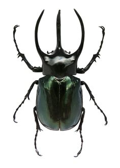 Small Stag Beetle  Insect Stag Beetle Beetledinah Wells Extraordinary Small Insects In Bathroom Design Decoration