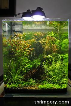 """Topic: epiphyte's EHEIM Aquastyle 9.2g - """"Moss Wood"""" (1/11) - Planted Space - Planted Space"""