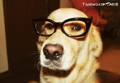pretty dog wears glasses