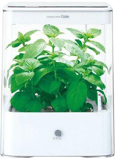 [ユーイング] グリーンファーム キューブ / Green Farm Cube on ShopStyle
