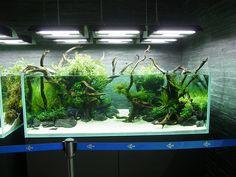 aquarium GREENの画像