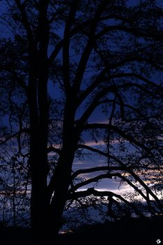 """stefcordey: """"The Calm Evening """" Night Whispers, Landscape Background, Art Reference, Sky, Sunset, Nature, Travel, Outdoor, Silhouettes"""