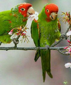 Sharing is Caring 💜 Love Birds, Beautiful Birds, Animals Beautiful, Large Animals, Animals And Pets, Cute Animals, Tropical Birds, Exotic Birds, Mundo Animal