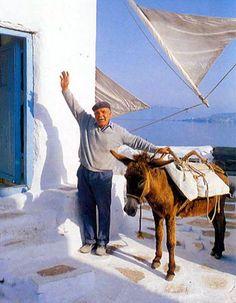 I wonder if Aquila use mules? ---------[Hello from Mykonos island ~ Greece] Mykonos Town, Mykonos Greece, Crete Greece, Athens Greece, Santorini, Myconos, Mykonos Island, Africa Travel, Travel Europe