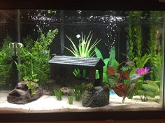 well planted 20 gallon aquariums - Google Search                                                                                                                                                      More