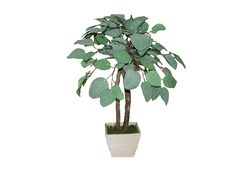Mamone Home and Garden H Mini Tropical Fittonia Tree In Wood Planter, 28' -- Check this awesome product by going to the link at the image.