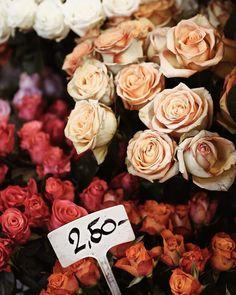 Roses! Hana, Roses, Flowers, Plants, Beautiful, Instagram, Pink, Rose, Plant