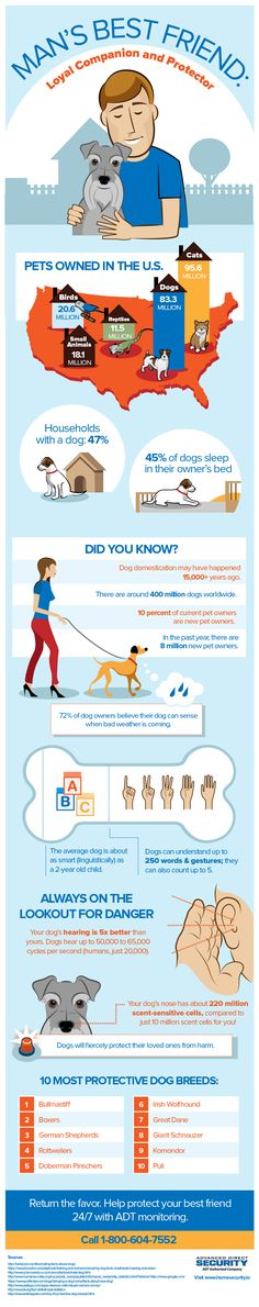 This amazing dog infographic about being man's best friend is brought to you by ADT Home Security