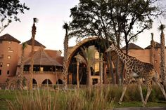 Animal Kingdom Lodge in Orlando, FL, although the animals are technically in captivity, the folks at Walt Disney World Resort have gone through great lengths to recreate the natural habitat of the African savannah & you can spot some 200 animals right from the balcony of your suite..