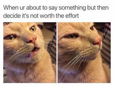 #funny #meme #topgoss Workout Memes, Gym Memes, Funny Cat Memes, Fitness Memes, Memes Humour, Funniest Memes, Vape Memes, Best Memes Ever, Animal Memes