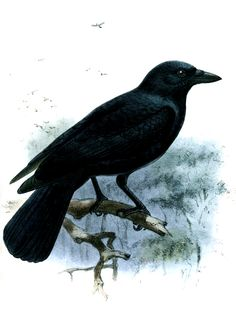 Crows and kea parrots found to learn usefulness of objects similar to the way human babies do it