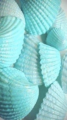 Teal and turquoise sea shells Blue Wallpaper Iphone, Blue Wallpapers, Turquoise Wallpaper, Blue Aesthetic Pastel, Aesthetic Colors, Shades Of Turquoise, Shades Of Blue, Aqua Blue, Color Cian