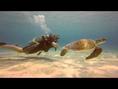 Diving Bonaire - Hig