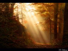 Enchanted Forest by RobinHalioua on @DeviantArt