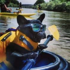 Frenchie! On the water