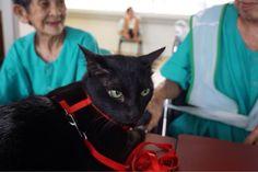 Jun Cat | Pawshake Singapore