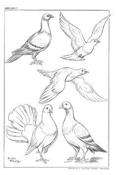 Bird Drawings, Pencil Art Drawings, Animal Drawings, Drawing Sketches, Drawing Birds, Vogel Illustration, Art Rose, Bird Sketch, Arte Sketchbook