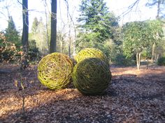 Willow spheres at Harlow Carr by Phil Bradley