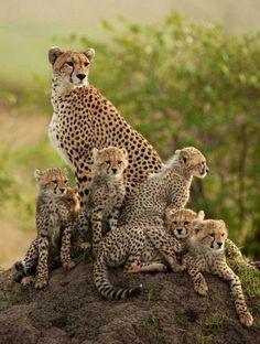 Beautiful mother and babies.