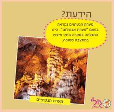 עובדה מעניינת על פלאי הטבע- פה בארצנו הקטנטונת!  עוד עובדות וחידות ישראליות -  www.lettersfromjulie.com 058-5454448