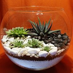 Selecting Plants for Container Gardening Occasionally, landscaping your home can be difficult, but most of the time it appears harder than it actually is. Terrarium Bowls, Succulent Bowls, Air Plant Terrarium, Succulent Gardening, Succulent Arrangements, Container Gardening, Terrarium Ideas, Succulents In Containers, Cacti And Succulents