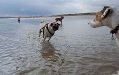 Pett Level - Dog Walking  Hastings Pet Care  St Leonards Dog Walkers