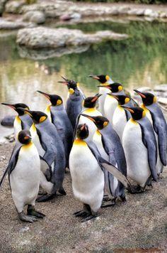 Con la actualización Penguin de Google las cosas se han puesto feas para realizar un linkbuilding masivo, ya que esta nueva actualización está afectando, y mucho, a los enlaces entrantes que tiene un sitio sino suenan del todo naturales, y, no nos engañemos, porque hasta ahora las técnicas de linkbuilding en el 90% de los casos se centraban en obtener un montón de enlaces, pero sobre los anchor text y demás había un velo negro la mar de bonito.
