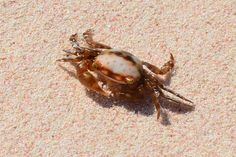 #sandcrabs #beaches These are a big part of any beach trip