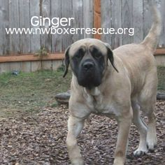 Ginger has been adopted! Congrats Ginger!